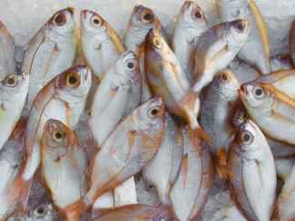catch fish fish market fishing